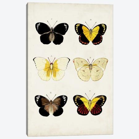 Vintage Butterflies I Canvas Print #VSN667} by Vision Studio Canvas Print