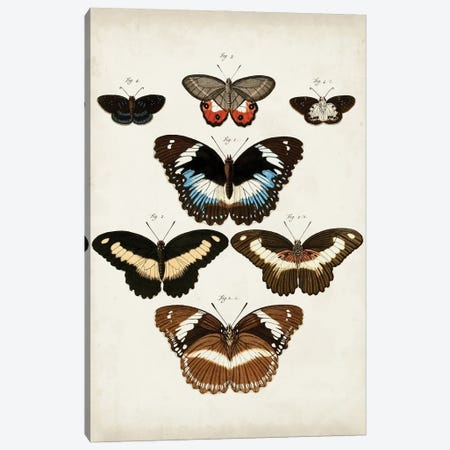 Vintage Butterflies II Canvas Print #VSN668} by Vision Studio Canvas Art