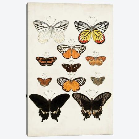 Vintage Butterflies III Canvas Print #VSN669} by Vision Studio Canvas Artwork
