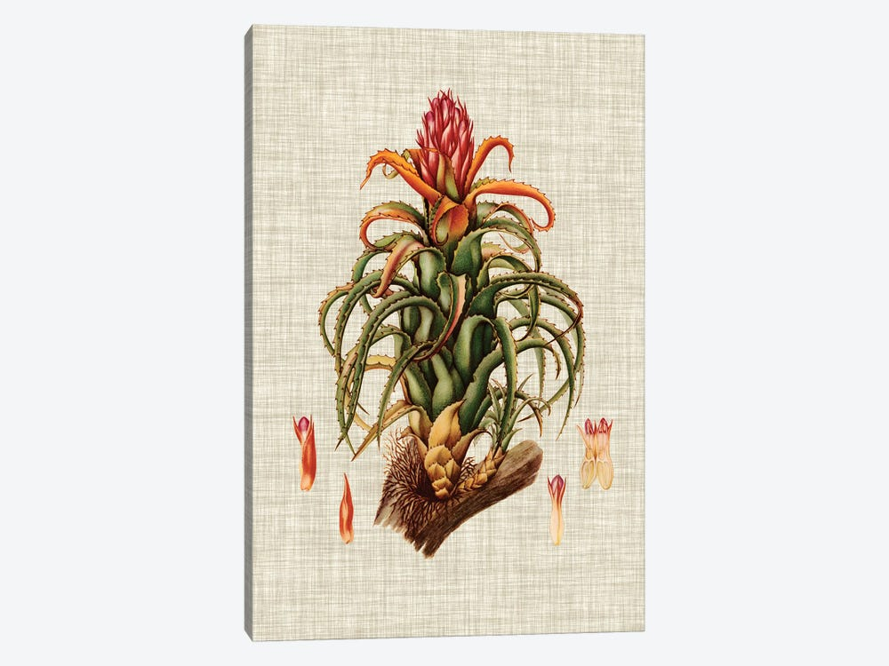 Elegant Tropicals IV by Vision Studio 1-piece Canvas Wall Art