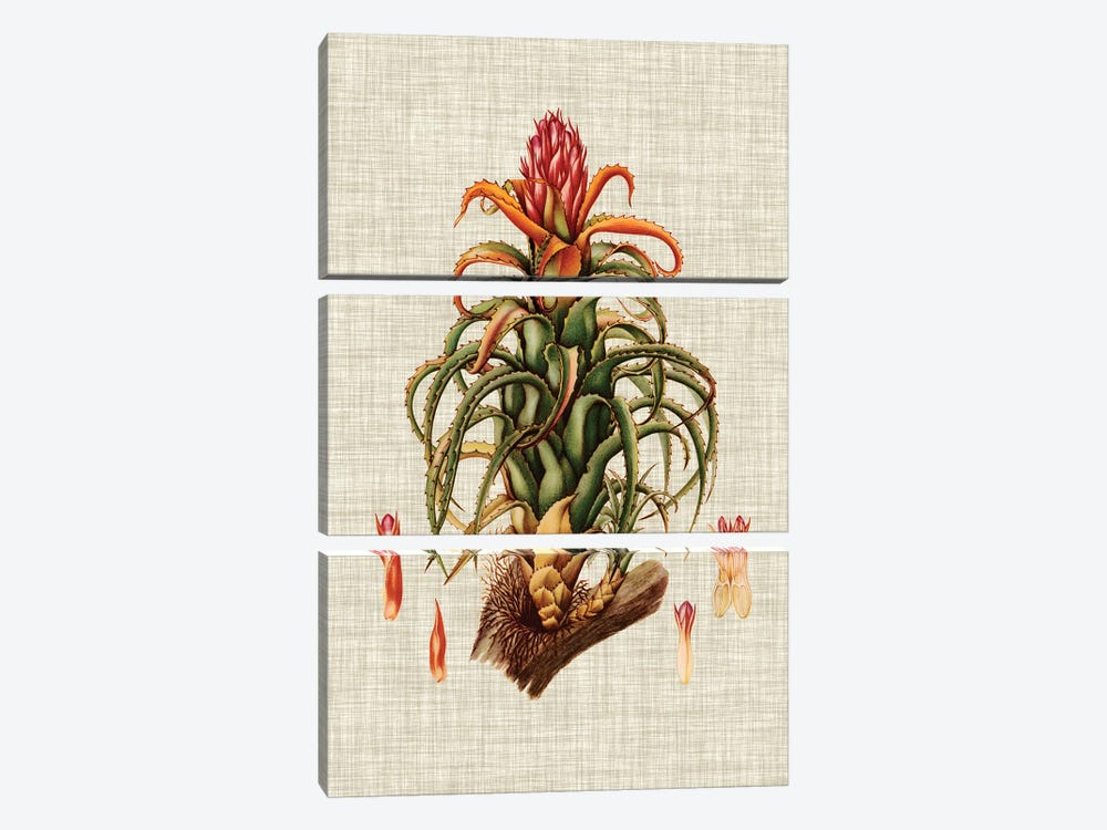Elegant Tropicals IV by Vision Studio 3-piece Canvas Artwork
