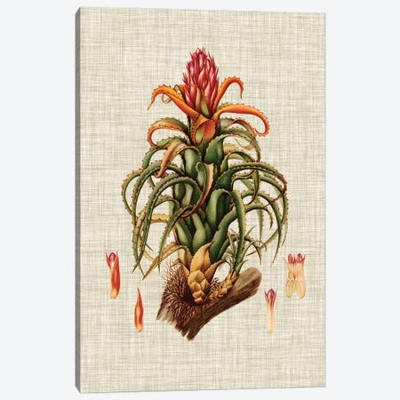 Elegant Tropicals IV Canvas Print #VSN66} by Vision Studio Art Print