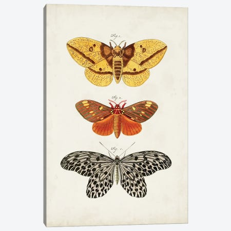 Vintage Butterflies IV Canvas Print #VSN670} by Vision Studio Art Print