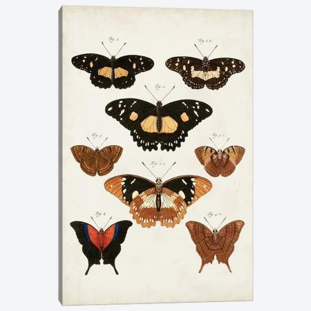Vintage Butterflies V Canvas Print #VSN671} by Vision Studio Canvas Art Print