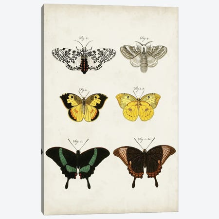 Vintage Butterflies VI Canvas Print #VSN672} by Vision Studio Canvas Art Print