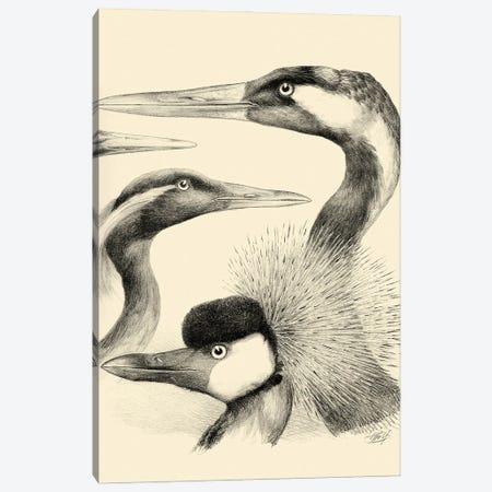 Waterbird Sketchbook I Canvas Print #VSN678} by Vision Studio Art Print