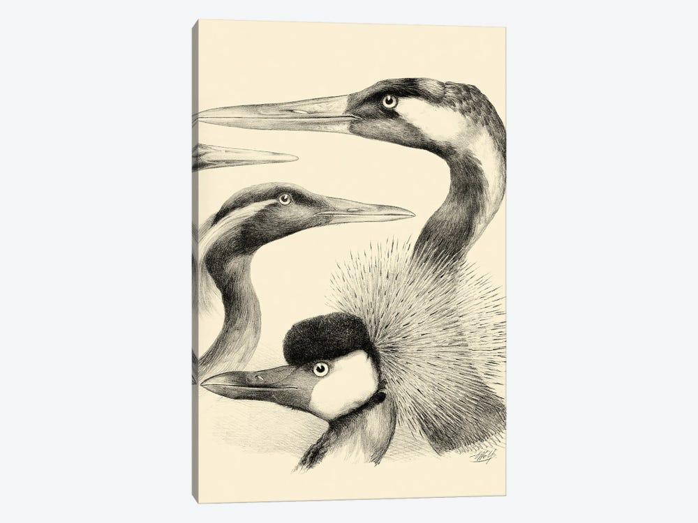 Waterbird Sketchbook I by Vision Studio 1-piece Canvas Artwork