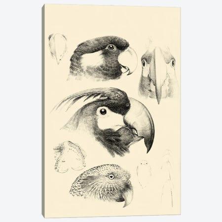 Waterbird Sketchbook III Canvas Print #VSN679} by Vision Studio Canvas Art Print