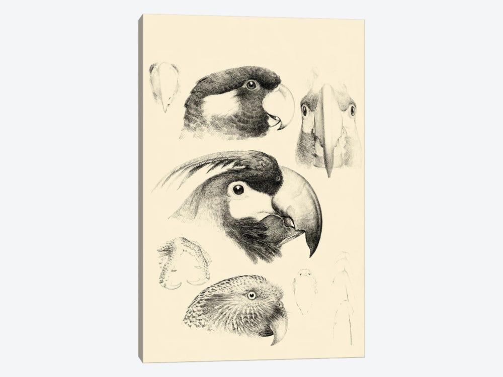 Waterbird Sketchbook III by Vision Studio 1-piece Canvas Print
