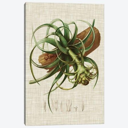 Elegant Tropicals V Canvas Print #VSN67} by Vision Studio Canvas Art Print