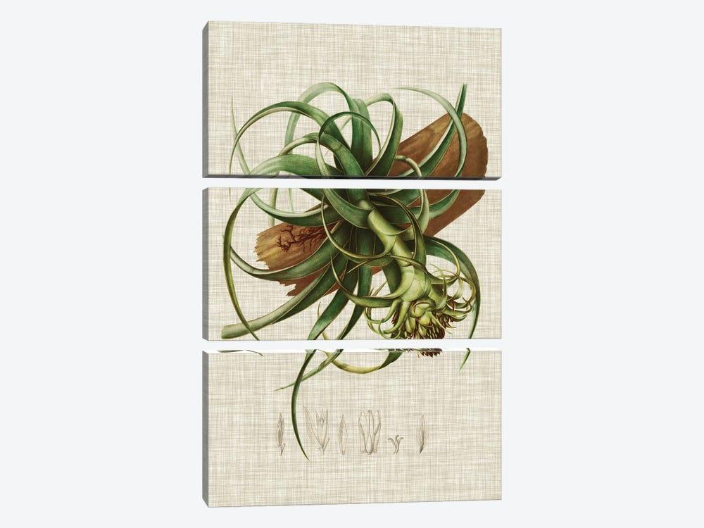 Elegant Tropicals V by Vision Studio 3-piece Canvas Art Print