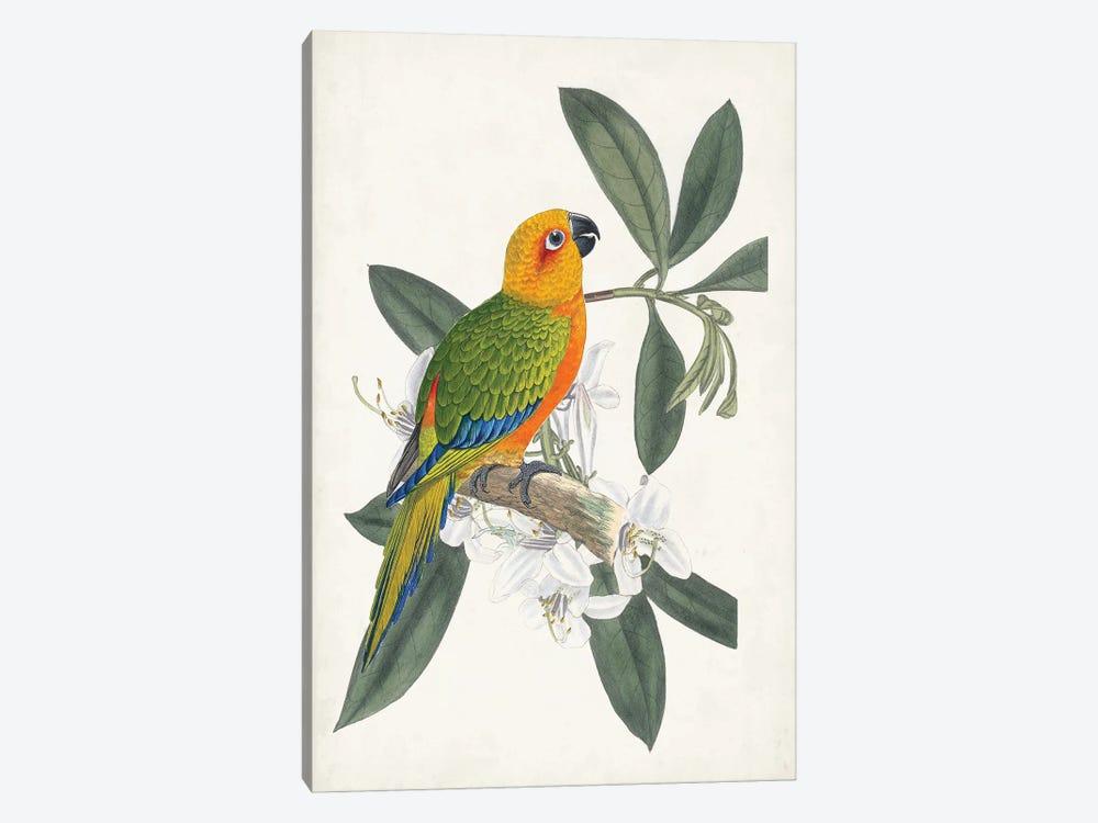 Tropical Bird & Flower I by Vision Studio 1-piece Canvas Art Print