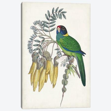 Tropical Bird & Flower II Canvas Print #VSN681} by Vision Studio Canvas Art