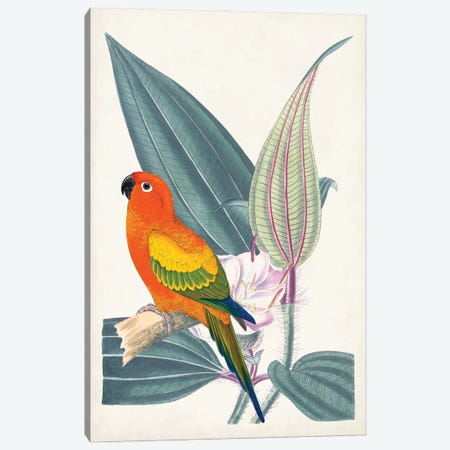 Tropical Bird & Flower IV Canvas Print #VSN683} by Vision Studio Canvas Art