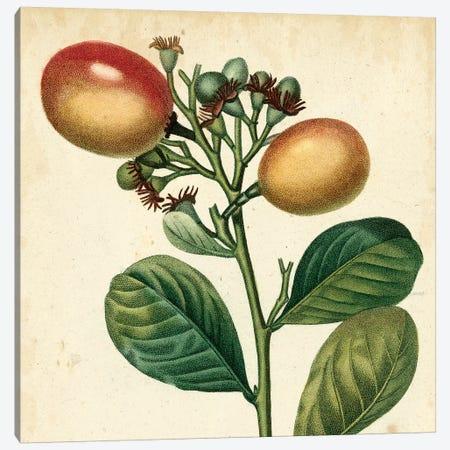 Garden Bounty I Canvas Print #VSN69} by Vision Studio Canvas Art
