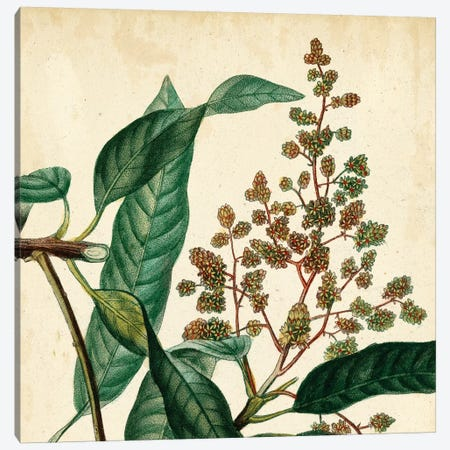 Garden Bounty II Canvas Print #VSN70} by Vision Studio Art Print