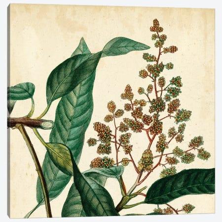 Garden Bounty II Canvas Print #VSN70} by Vision Studio Art Print