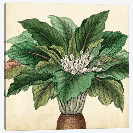 Garden Bounty V Canvas Print #VSN73} by Vision Studio Canvas Print