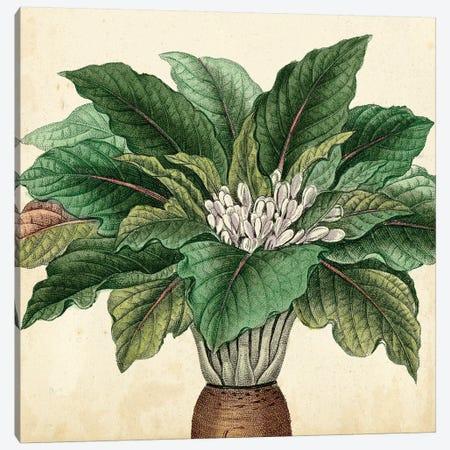 Garden Bounty V Canvas Print #VSN73} by Vision Studio Canvas Print