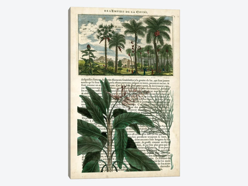 Journal Of The Tropics I by Vision Studio 1-piece Canvas Art Print