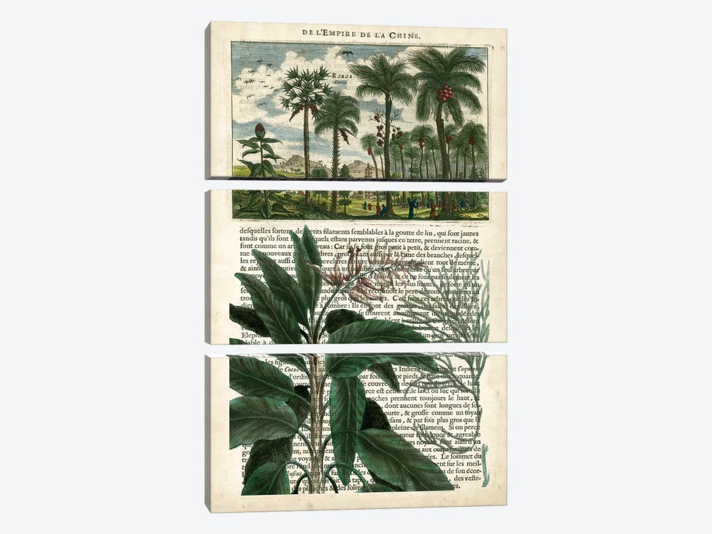 Journal Of The Tropics I by Vision Studio 3-piece Canvas Print