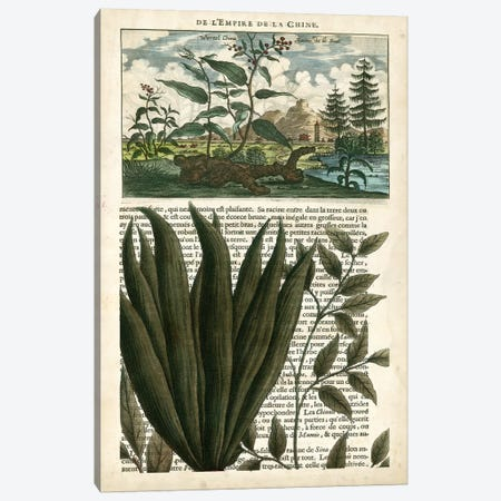 Journal Of The Tropics III Canvas Print #VSN80} by Vision Studio Canvas Artwork