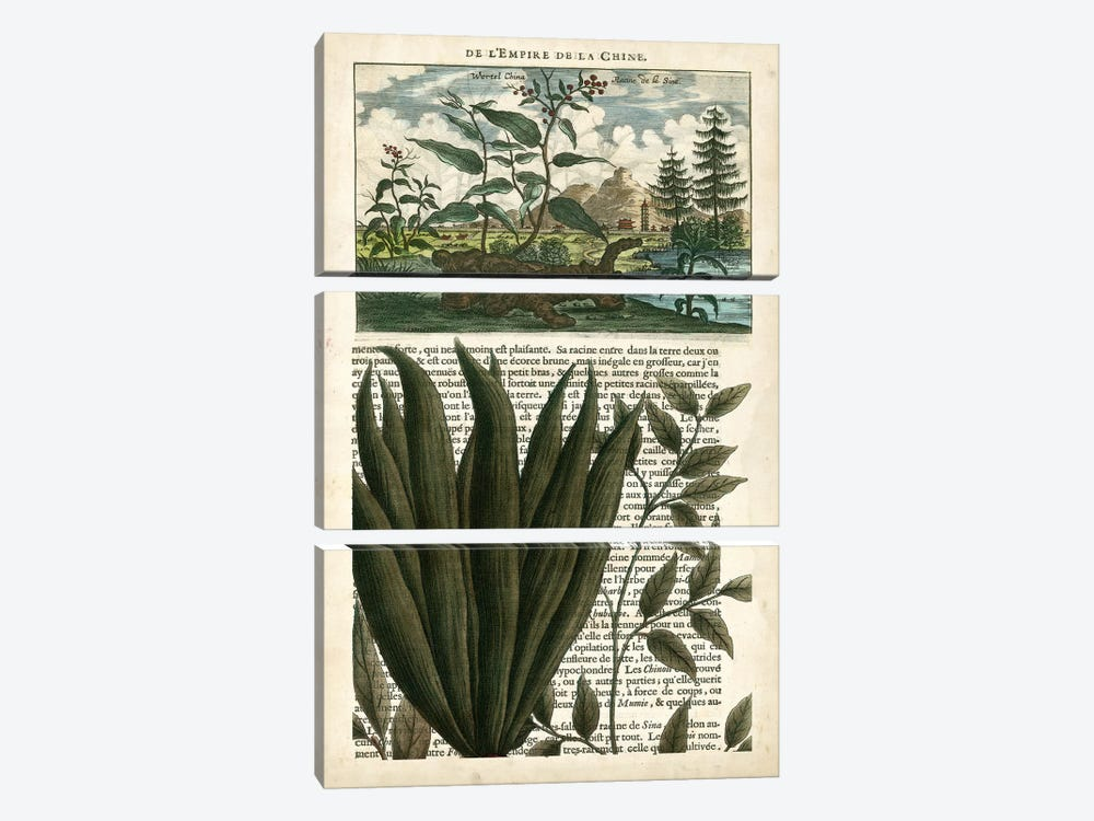 Journal Of The Tropics III by Vision Studio 3-piece Canvas Artwork
