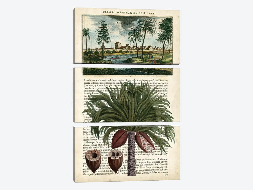 Journal Of The Tropics IV by Vision Studio 3-piece Canvas Art Print