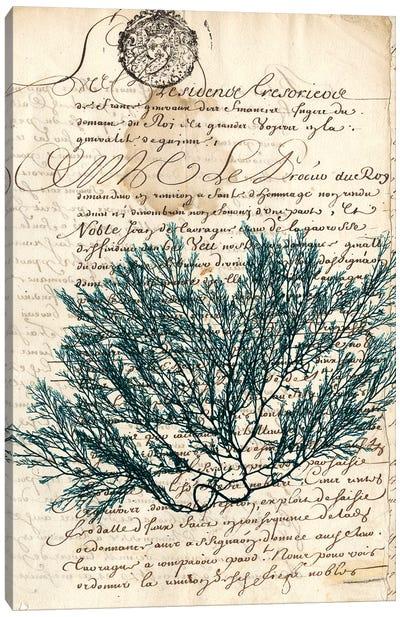Vintage Teal Seaweed I Canvas Print #VSN82