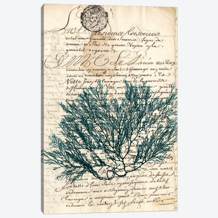 Vintage Teal Seaweed I Canvas Print #VSN82} by Vision Studio Canvas Art