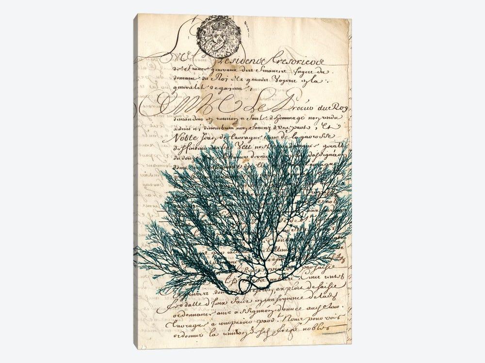Vintage Teal Seaweed I by Vision Studio 1-piece Canvas Artwork