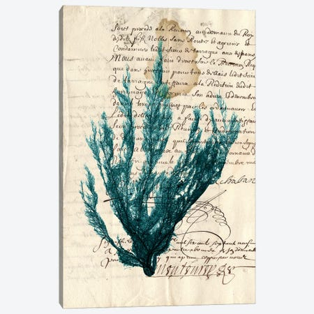 Vintage Teal Seaweed II Canvas Print #VSN83} by Vision Studio Canvas Wall Art