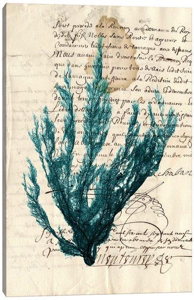 Vintage Teal Seaweed II Canvas Print #VSN83