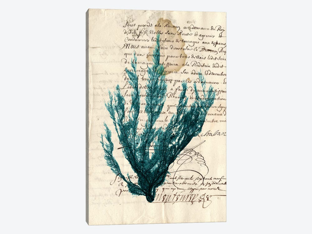 Vintage Teal Seaweed II by Vision Studio 1-piece Art Print