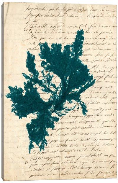 Vintage Teal Seaweed IV Canvas Print #VSN85