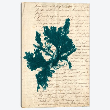 Vintage Teal Seaweed IV Canvas Print #VSN85} by Vision Studio Canvas Art Print