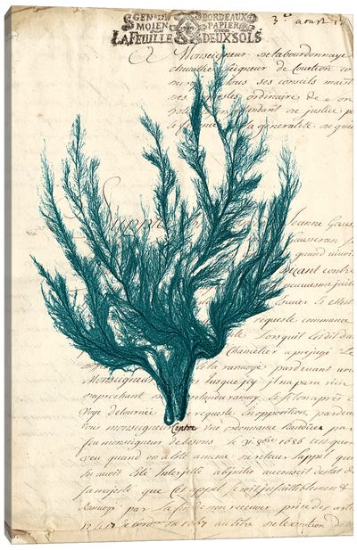 Vintage Teal Seaweed V Canvas Art Print