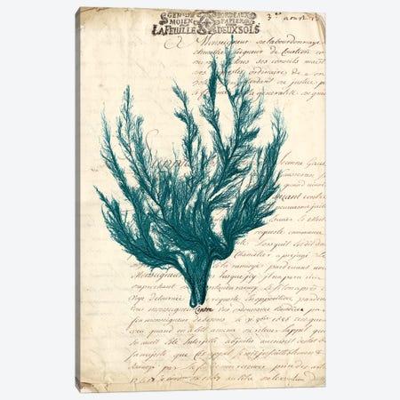 Vintage Teal Seaweed V Canvas Print #VSN86} by Vision Studio Art Print
