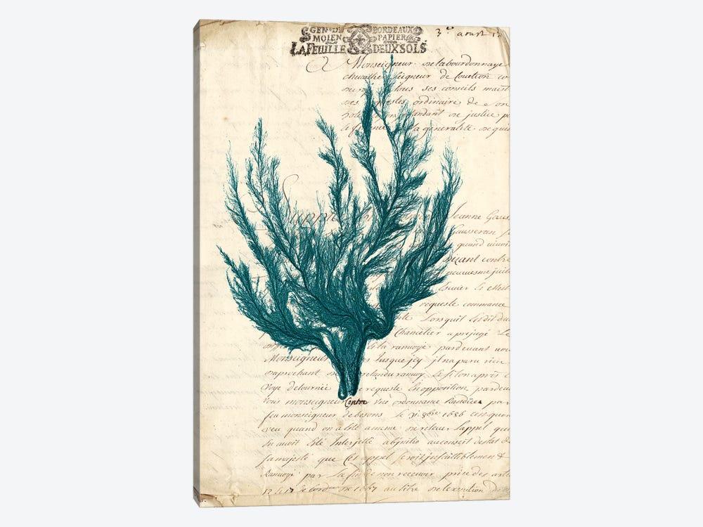 Vintage Teal Seaweed V by Vision Studio 1-piece Canvas Artwork