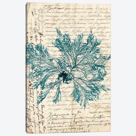 Vintage Teal Seaweed VI Canvas Print #VSN87} by Vision Studio Art Print