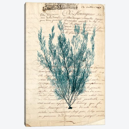 Vintage Teal Seaweed VII Canvas Print #VSN88} by Vision Studio Canvas Artwork