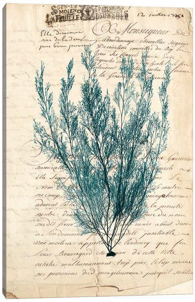 Vintage Teal Seaweed VII Canvas Art Print