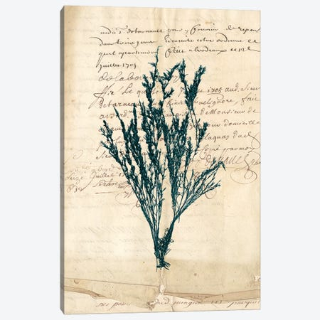 Vintage Teal Seaweed VIII Canvas Print #VSN89} by Vision Studio Canvas Artwork