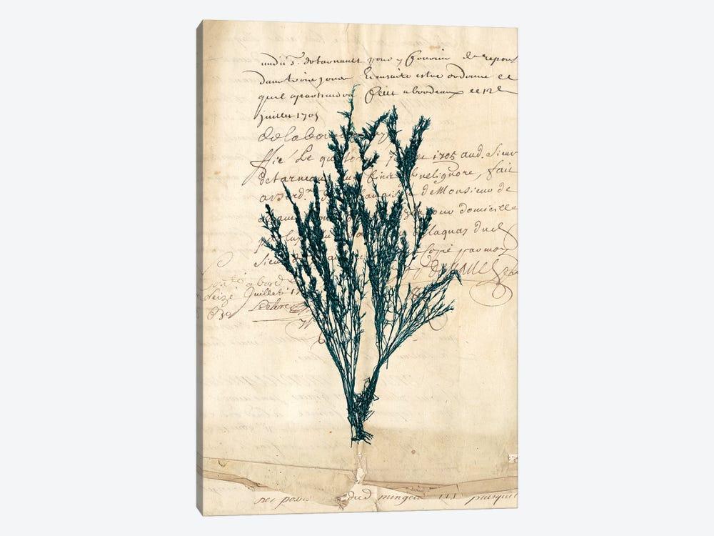 Vintage Teal Seaweed VIII by Vision Studio 1-piece Canvas Print