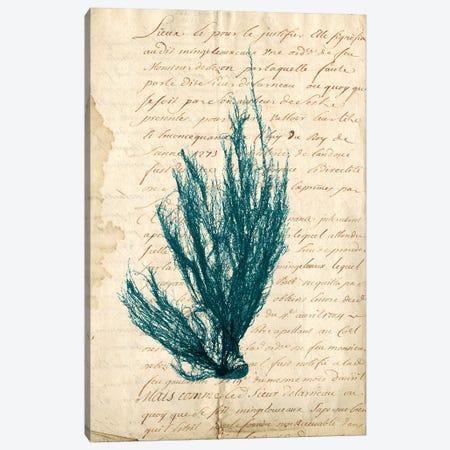 Vintage Teal Seaweed IX Canvas Print #VSN90} by Vision Studio Art Print