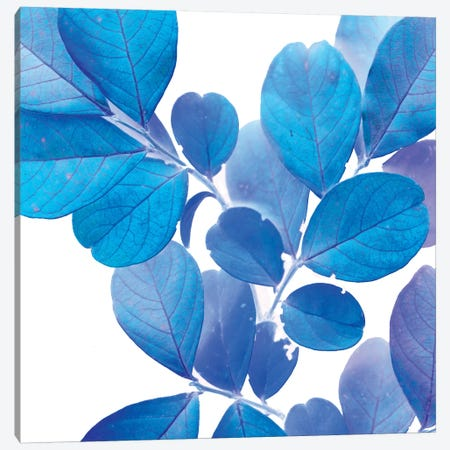 X-ray Leaves I Canvas Print #VSN91} by Vision Studio Canvas Print