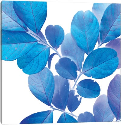 X-ray Leaves I Canvas Print #VSN91