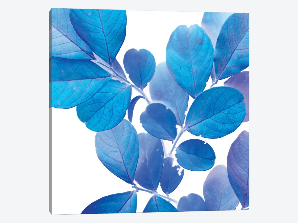 X-ray Leaves I by Vision Studio 1-piece Canvas Wall Art