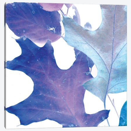 X-ray Leaves II Canvas Print #VSN92} by Vision Studio Art Print