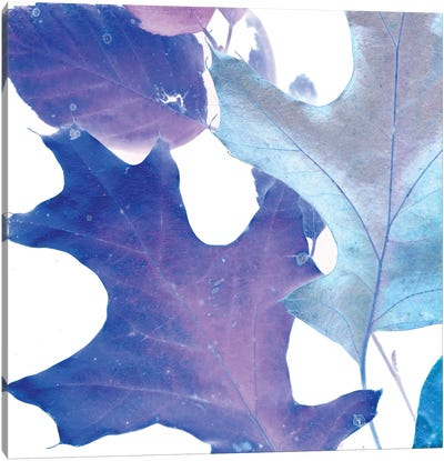 X-ray Leaves II Canvas Print #VSN92